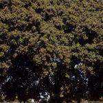 El árbol que olvidó a la muerte